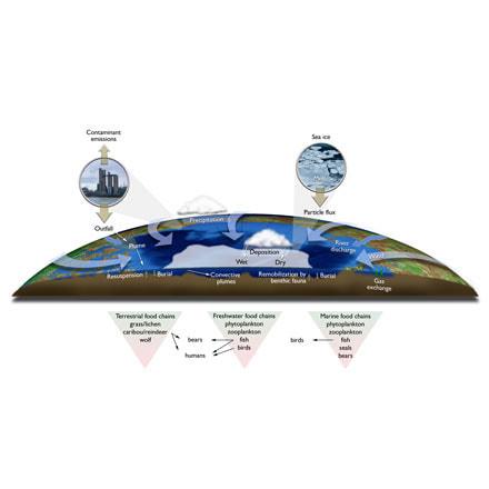 Pollution Accumulation